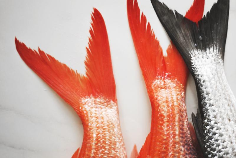 local_fish_byron_bay